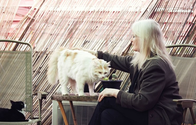 Cat power: will London's new hipster cat magazine leave us feline groovy?