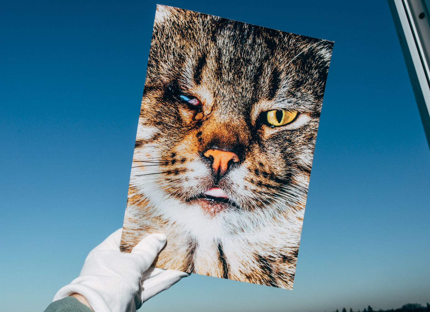 This zine shows the struggles of street cats by turning strays into cover stars