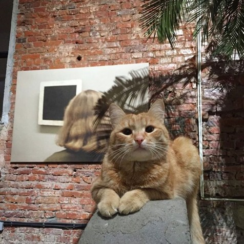 Instagram animals Garage cat