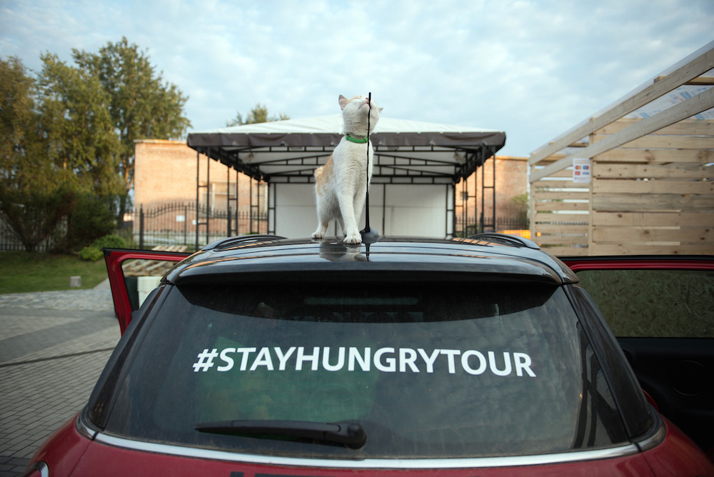 A local cat enjoys the view from the Stay Hungry car