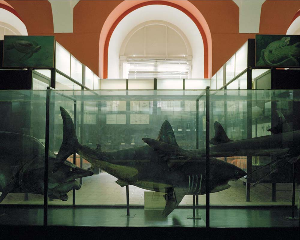 Sharks. Zoological Museum of Moscow State University