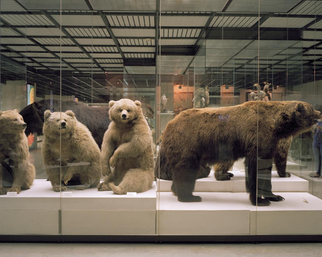 Bears. State Darwinism Museum. From Relics, a series of of photographs from lesser known Russian museums by Lily Idov