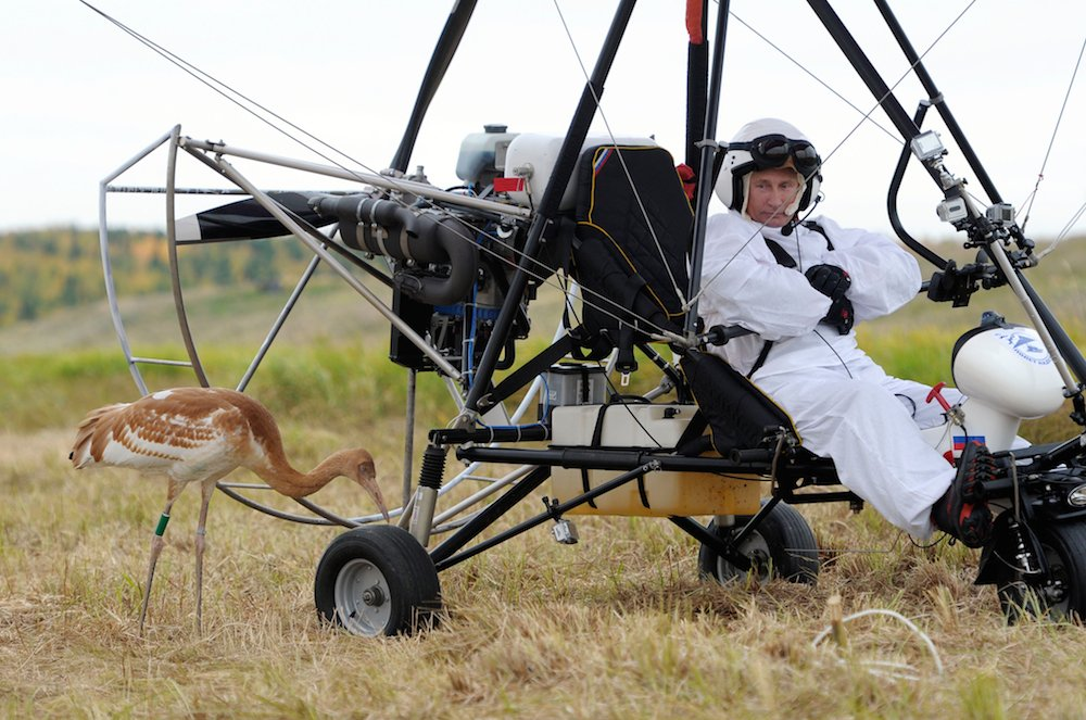 "Russian President Vladimir Putin takes part in the ""Flight of Hope"" to preserve a rare species of crane on 5 September 2012 (Photo: RIA Novosti)"