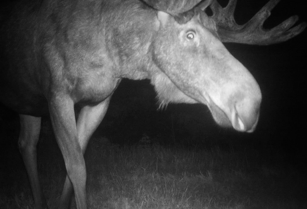 Animals of Chernobyl: welcome to the wildlife paradise in a