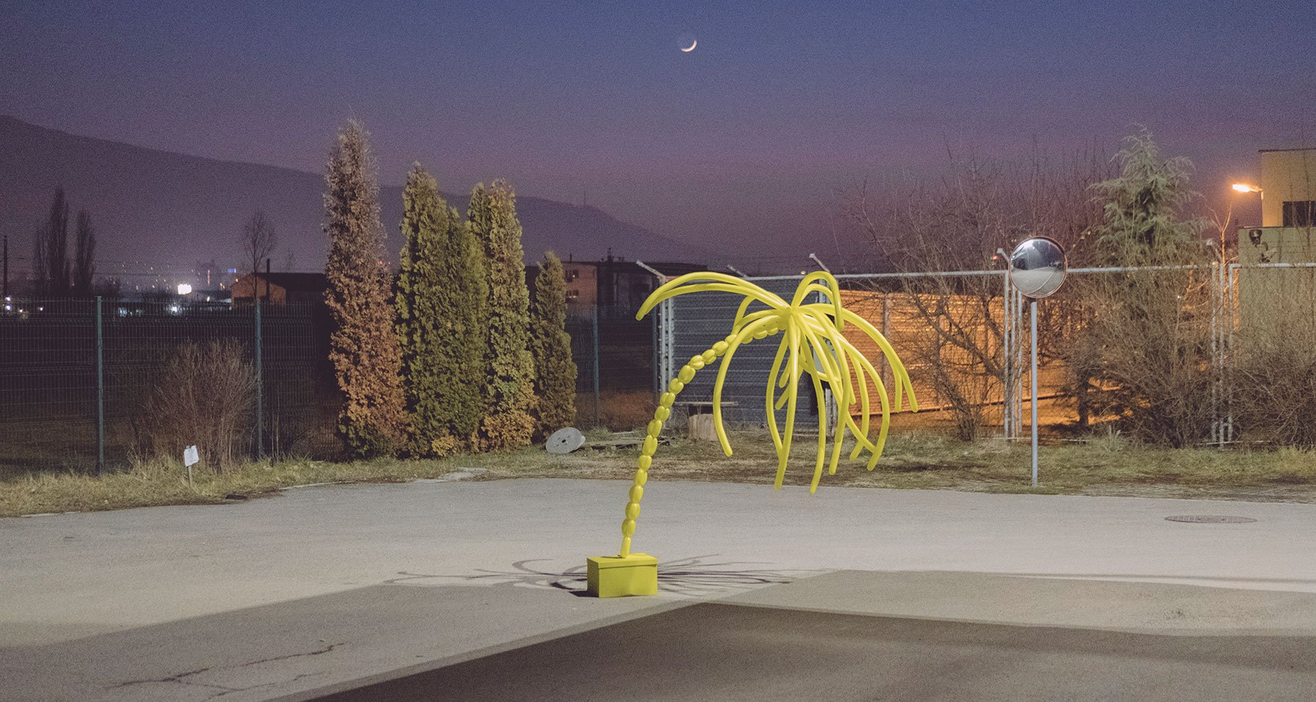 In a deserted Sofia carpark, a deflated palm tree becomes strangely relatable