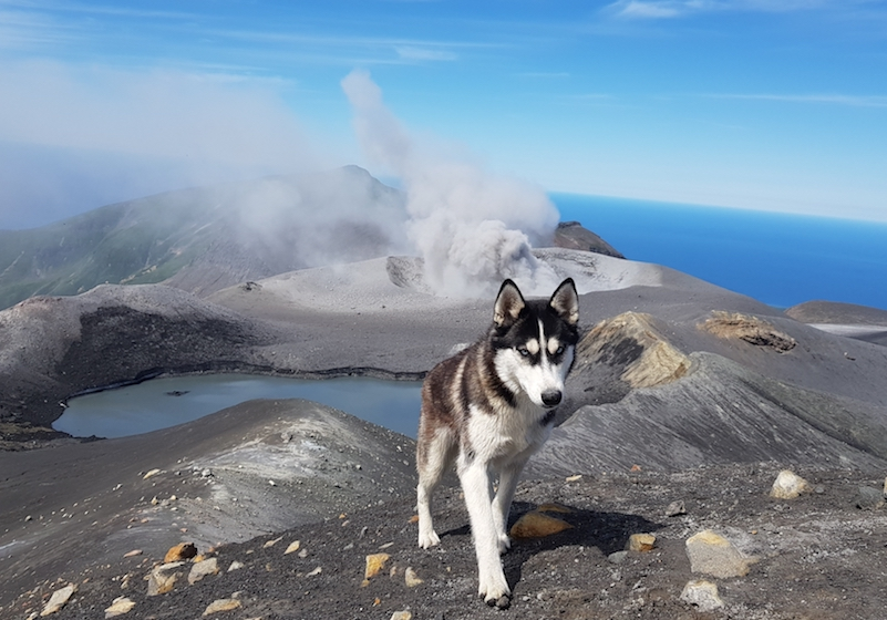 Stranded in Kamchatka during lockdown: follow one photographer's adventures with her dog
