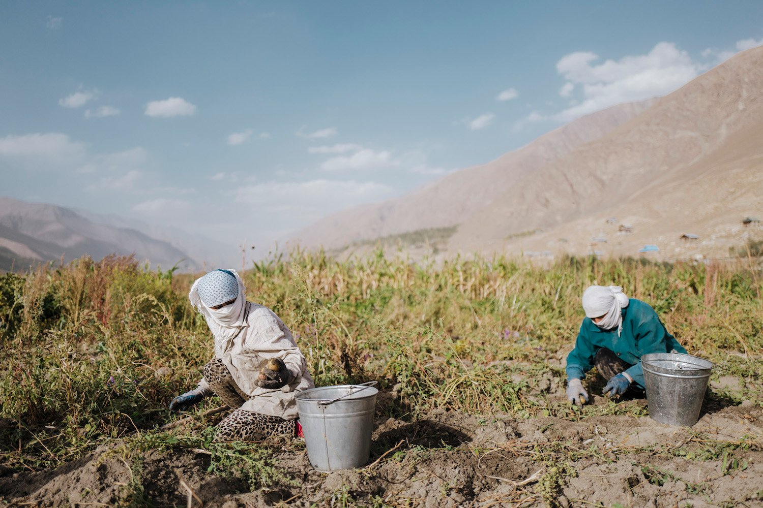 Harvesting in the Pamir Mountains