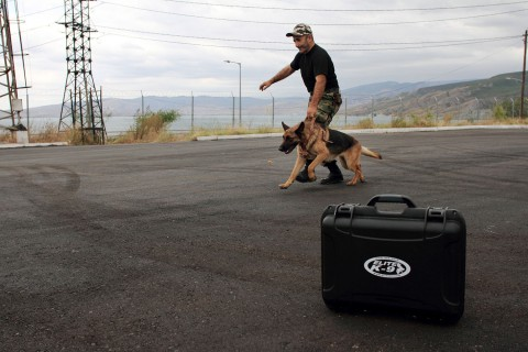A nose for danger: meet Dagestan's canine bomb-detectives and the men who train them