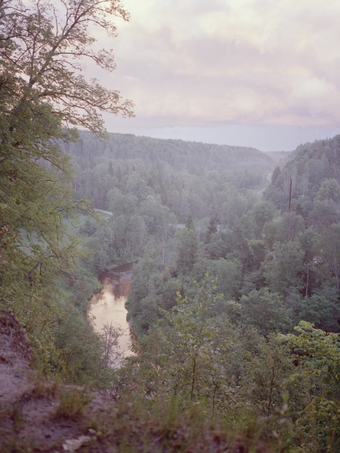 In bloom: see a generation blossom in Latvia's magical wilderness