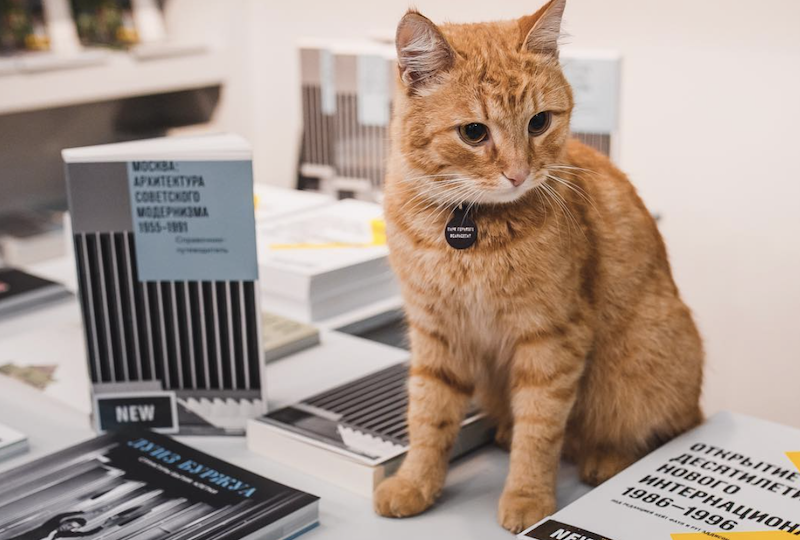 Stop everything: Moscow's Garage Museum cat has gone missing