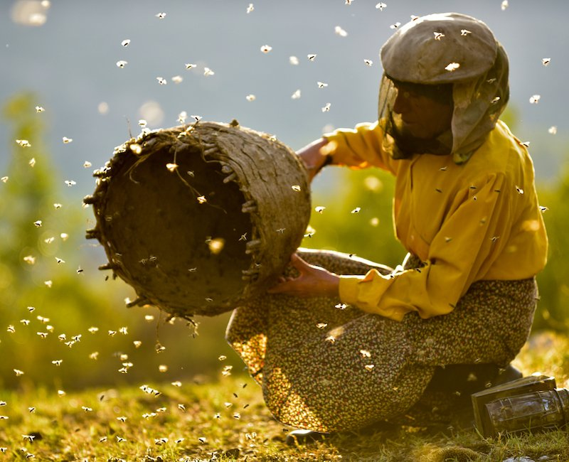 Watch the trailer for Honeyland, the Macedonian film creating a buzz at Sundance 2019