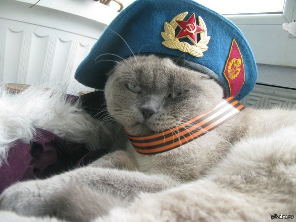 More images of pro-separatist pets flood the Russian internet