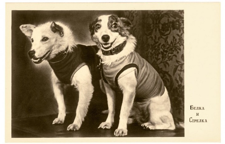 55 Years Since Soviet Space Dogs Strelka And Belka Went Into Orbit