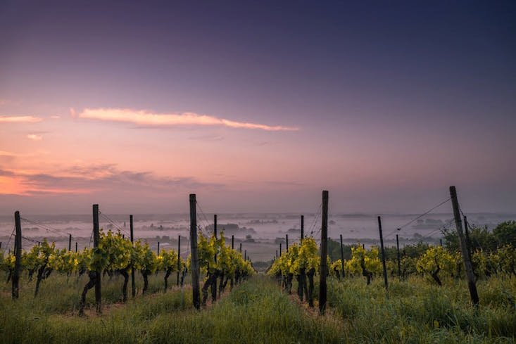 Liquid lunch: Moldova officially classes wine a food
