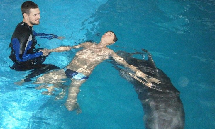 Meet the dolphins helping to treat PTSD in Ukraine