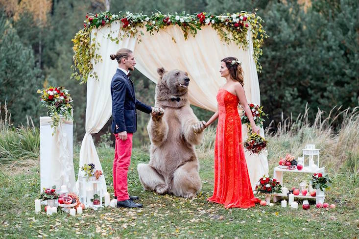 Did a bear really officiate a Russian wedding?