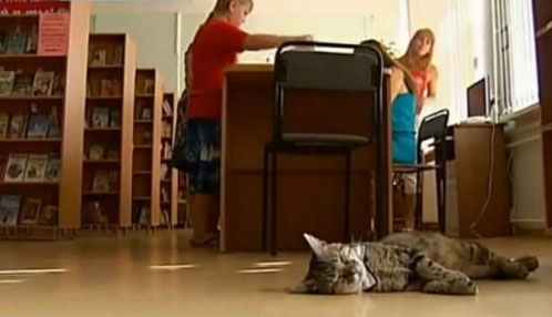 Stray cat given bow-tie and hired as assisant for Moscow library