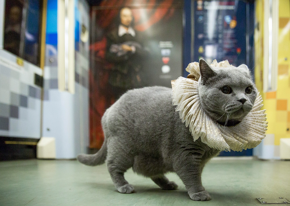 British cat launches new Shakespeare-themed train in Moscow