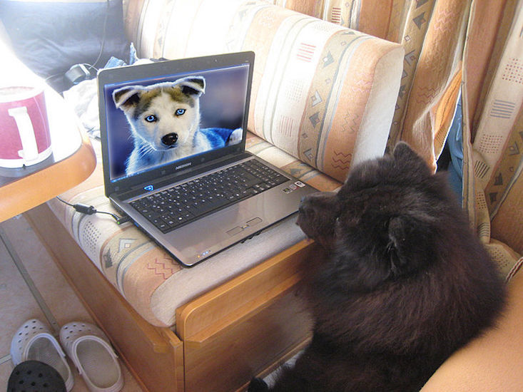 Social media site for pets to launch in Russia