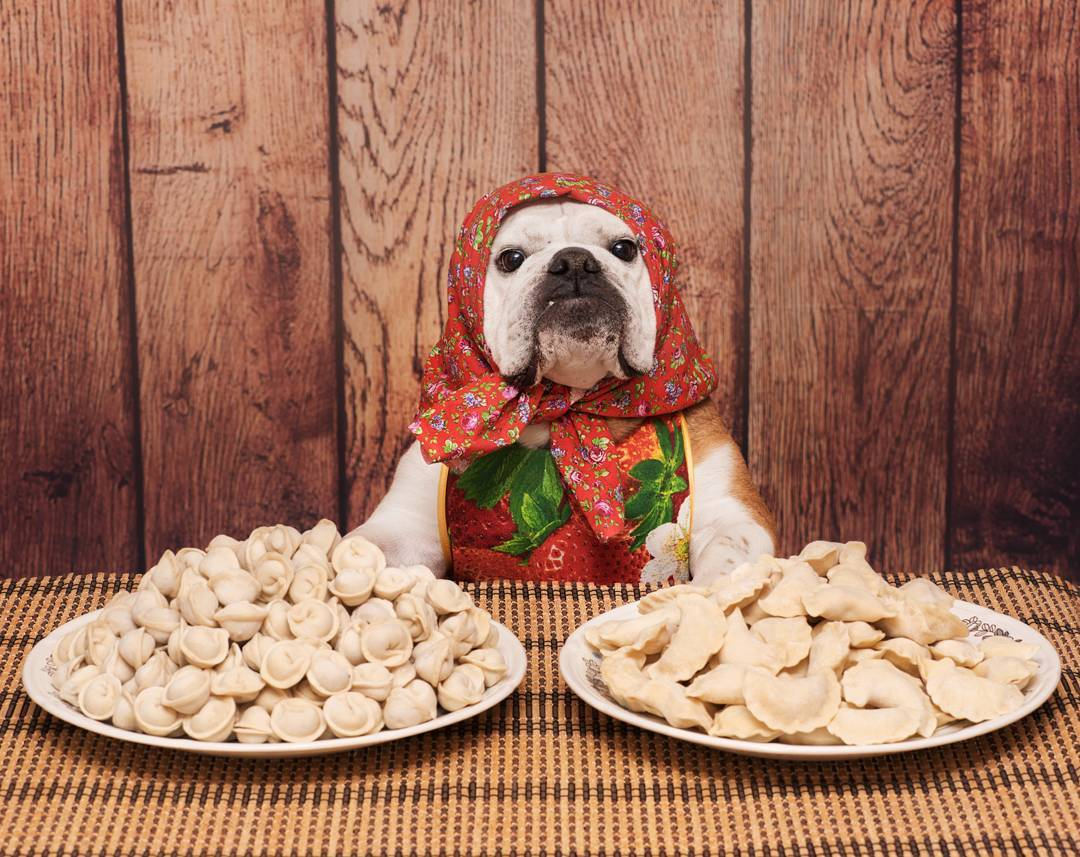 Follow of the week: blogger dog from the Far East