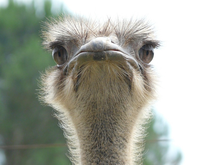 Traffic getting you down? One Almaty resident beat the jams with an ostrich