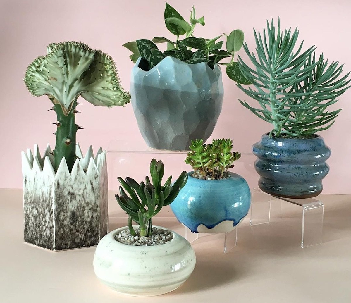 Follow of the week: splendid succulents in handmade pots