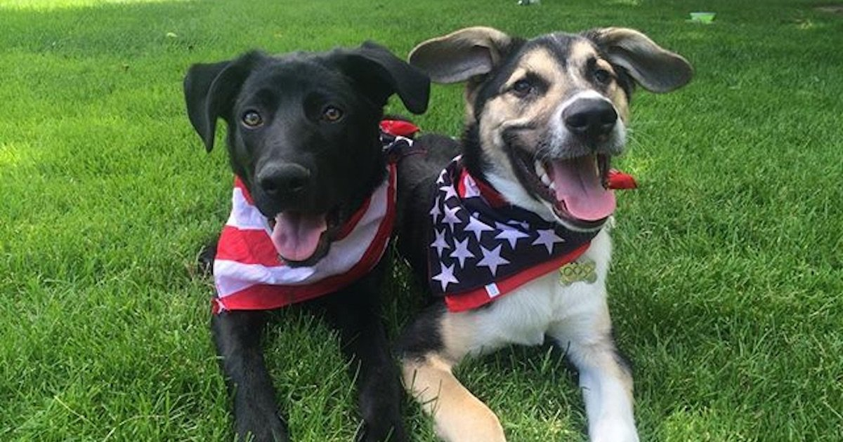 Adorable rescue pups from Sochi living the sweet life in the USA