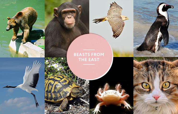 Beasts from the east: think you know your animals? Take our quiz