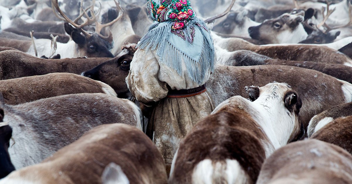 In Siberia's remote reindeer-herding communities, it's a woman's world