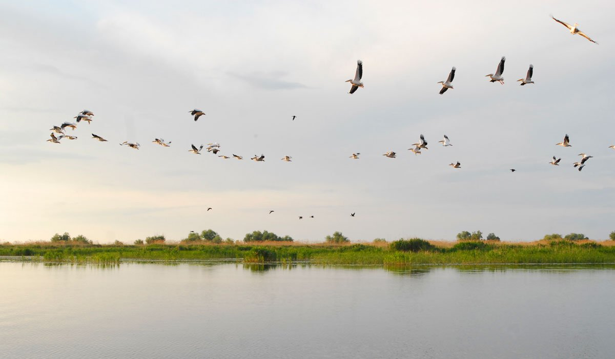 Letter from the Danube Delta: discover the waterways and villages of Romania's remotest corner
